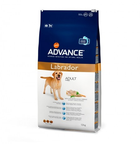 Advance labrador