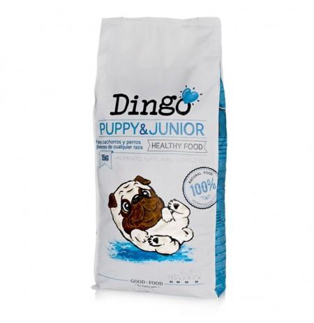 Dingo puppy & junior (cachorros)