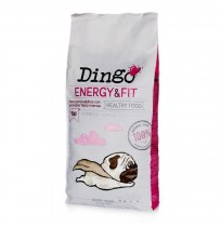 Dingo energy & fit (alta energía)